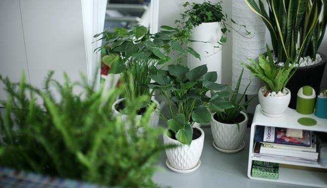 12 con giáp nên trồng cây gì để hút tiền tài